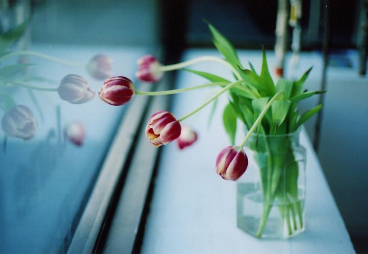 fuji160s_tulips1